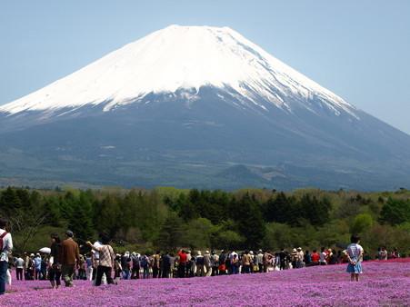 富士芝桜38