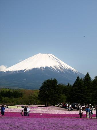 富士芝桜46