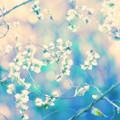 お花のように^^