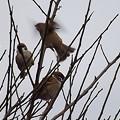 Photos: 雀の学校