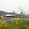 種花と豪華客船