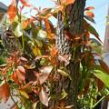Photos: 剪定した木から新芽がニョキニョキ