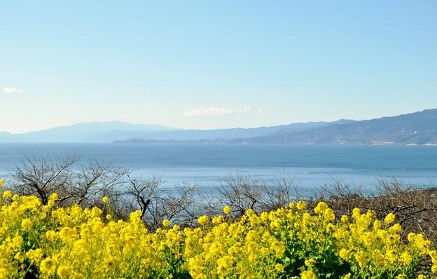 2014-01-19 ニコン 二宮よさこい 菜の花富士山 034