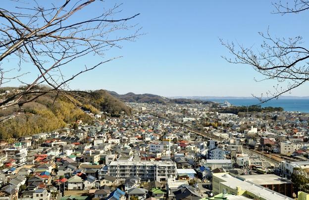 2014-01-19 ニコン 二宮よさこい 菜の花富士山 234