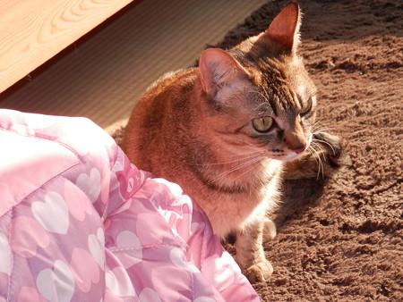預かり猫 メルシー嬢