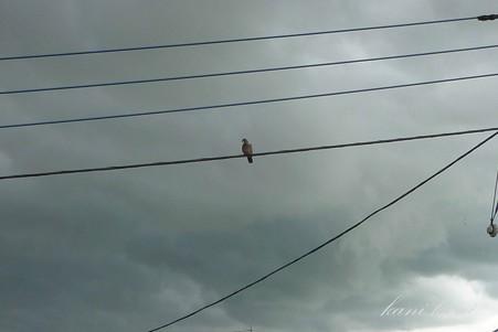 2012/09/02 ゲリラ豪雨の雲