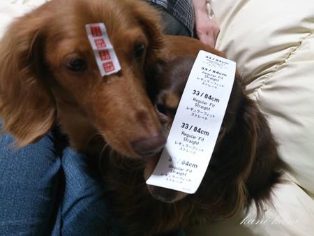 ユニクロ犬 チャッピー ラン