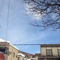 写真: 陽射しだけは春