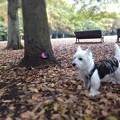Photos: 今朝の散歩