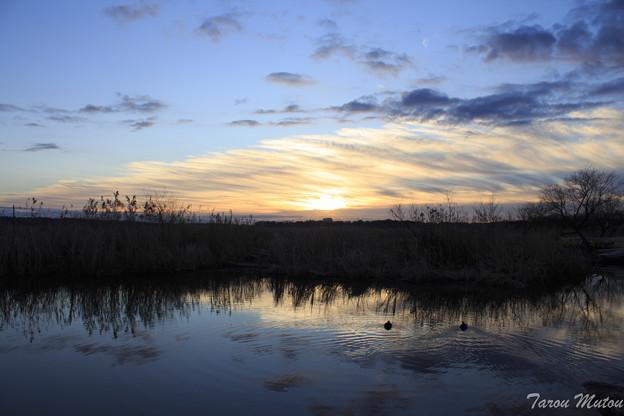 初日の出と水面の鴨