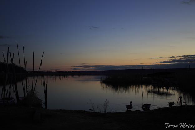 夜明けを待つ水鳥