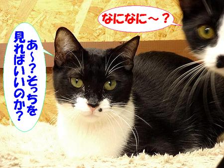ロビン&きぬこ