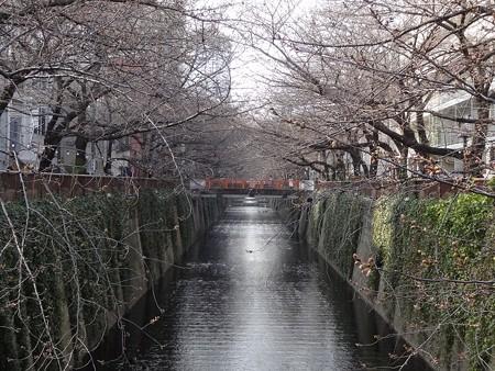 2013.3.18 目黒川の桜