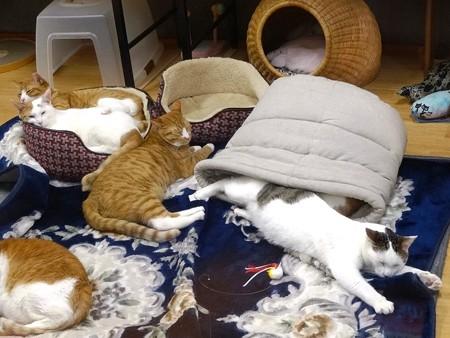 みんながまったり寝ている中・・・暑くて雪崩れて出てきたハッチ