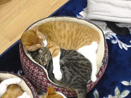 マロン&抱き枕?くり