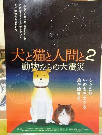 「犬と猫と人間と2」