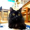 Photos: サファイヤ「正面に回ってくるなんて!ビックリだわ!」