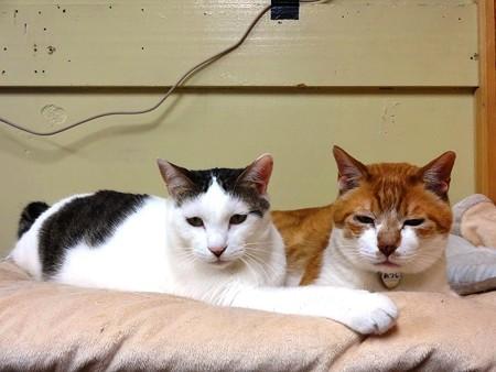 ハッチ&あつし「ボクたちいつも一緒にここで寝てるんだよ」