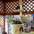 Photos: 猫の生るタワー