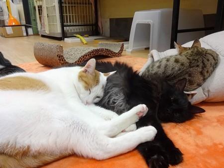 ミント「誰かにくっついて寝たいんです」