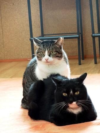 グリコ&カラン・・・家族写真?(笑)