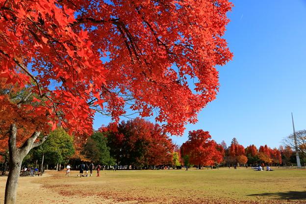岡山市総合グラウンド公園 ☆