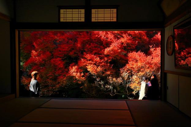 兵庫県安国寺、ドウダンツツジの紅葉 ♪
