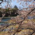 Photos: 美しい岡山の春 ☆★