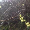 スズランみたいな花
