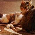 写真: 恋猫同士…?