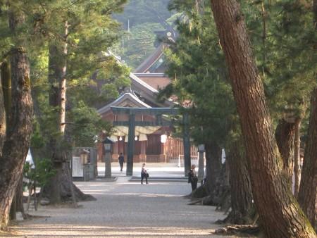 松の参道から覗く朝の出雲大社