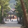 写真: 松の参道から覗く朝の出雲大社