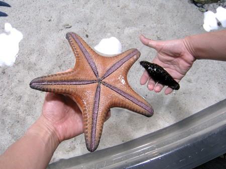 沖縄 美ら海水族館01 ヒトデとナマコ
