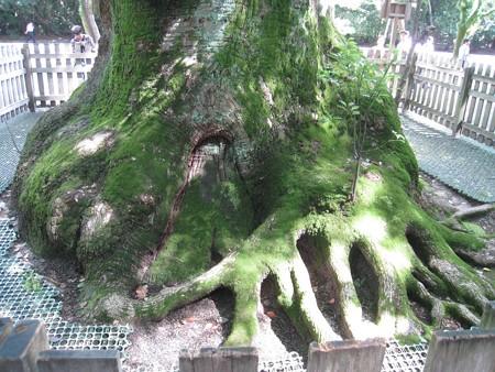 熱田神宮17 巨象の足みたいな大楠の根元