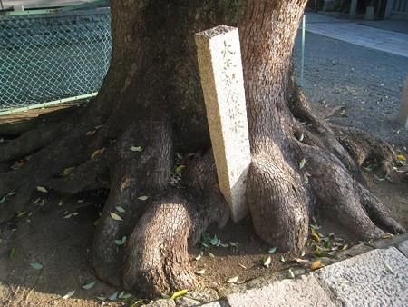 大鳥大社14 根に抱かれた大正記念碑