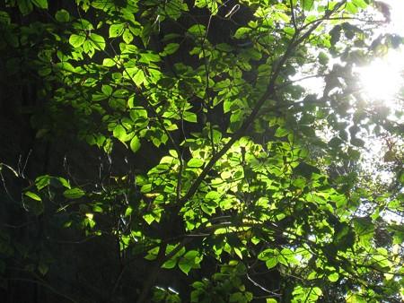 鋸山日本寺 虹色の陽光