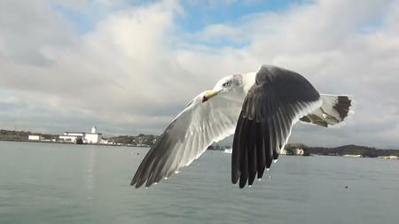 松島湾 海猫G-4