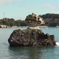 写真: 松島湾遊覧 島巡り10 仁王島