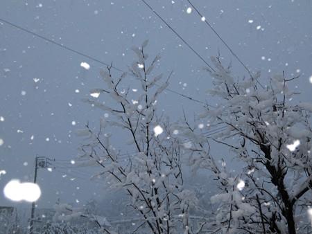 舞い降りる雪の妖精たち12