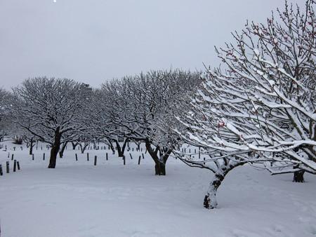20140211-9 梅林雪景色