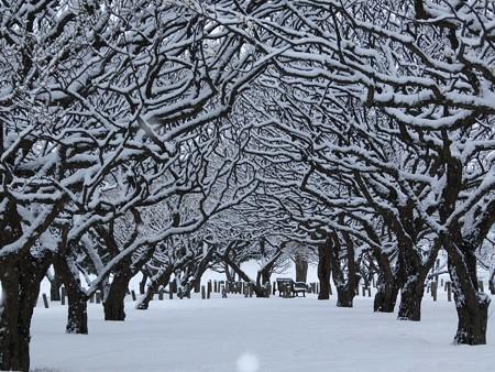 20140211-10 梅林雪景色