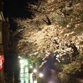 写真: 京都 高瀬川の夜桜