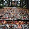 秋の参道 I