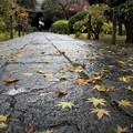 秋の参道 II