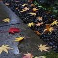 秋の落し物 II