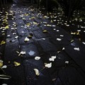 秋の参道 III