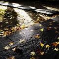 秋の参道 IV