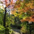 深まる秋のころ
