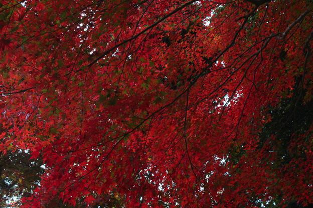 一字観公園の紅葉4