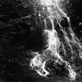 Photos: 霧降りの滝